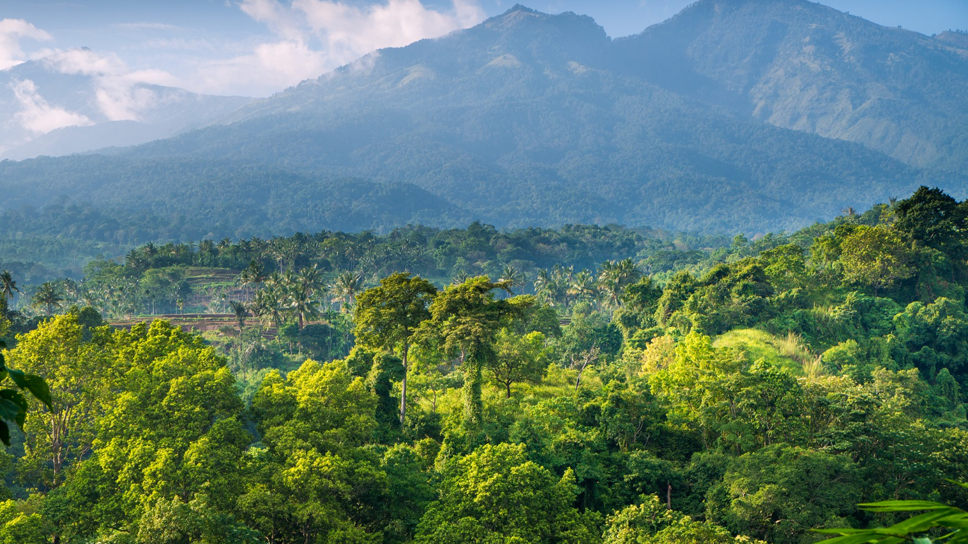 Accelerating forest positive action in the palm oil sector