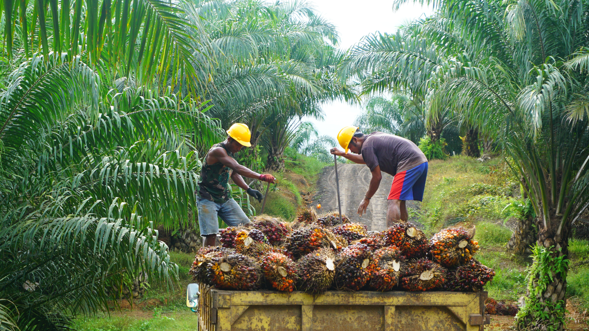 Beyond the 2020 milestone: crucial actions to make sustainable palm oil the norm