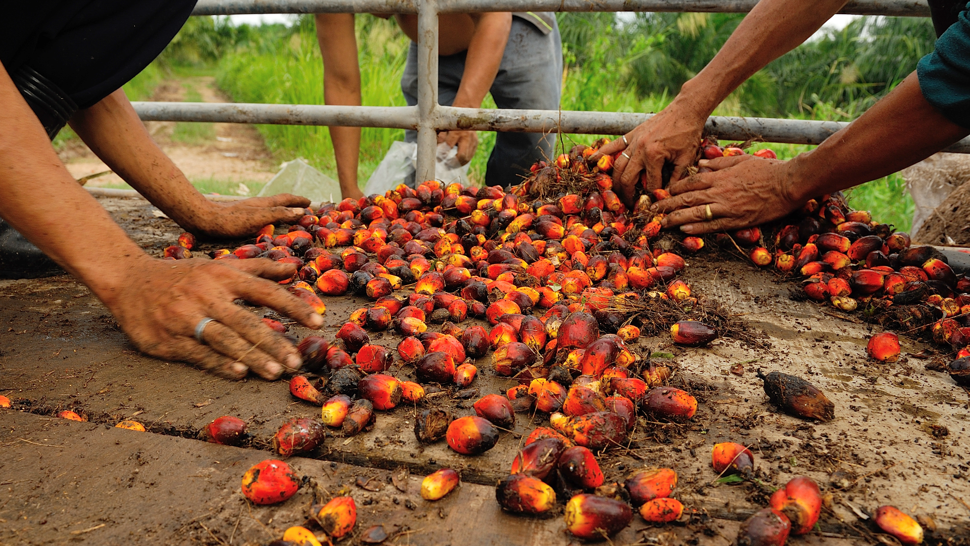 Driving positive social impact in the palm oil sector